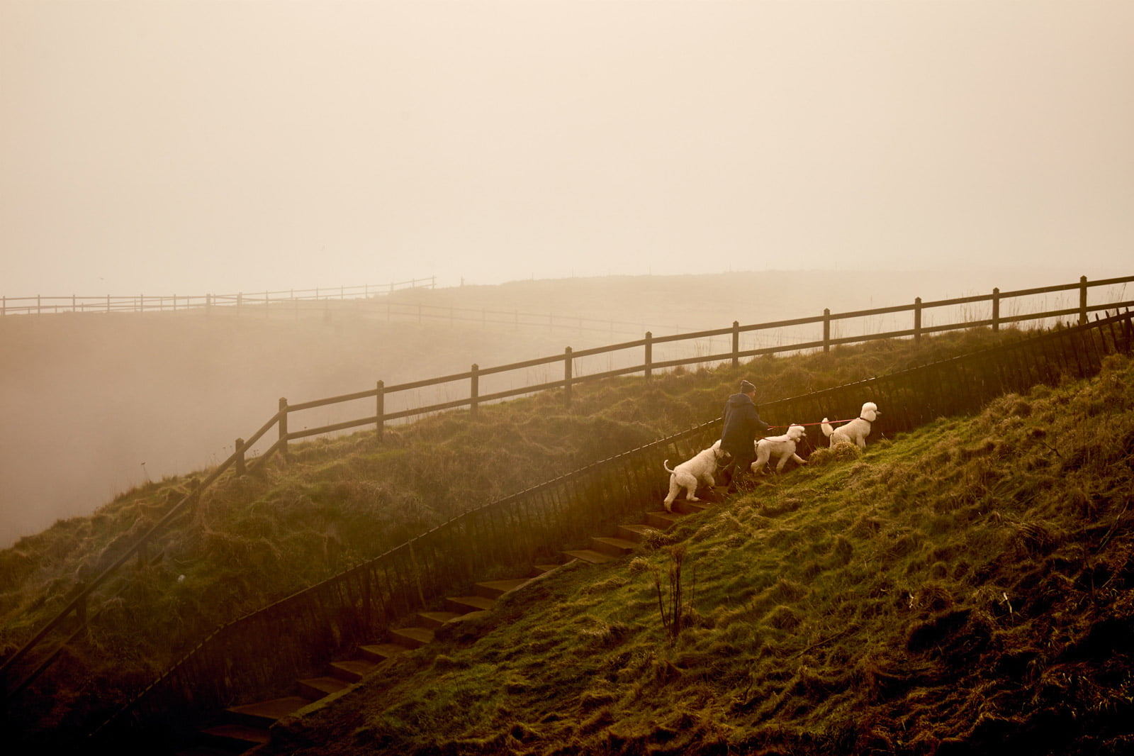 Three Dogs - Landscape Photographer Faceiro//Chris Underwood